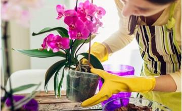 Orkide Çiçeği Bakımı Nasıl Olur?